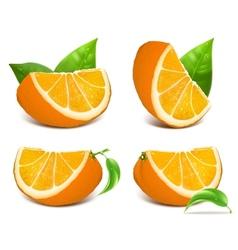 Fresh ripe oranges vector image