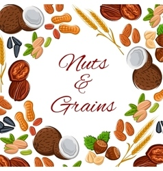 Nuts grain and seeds poster vector