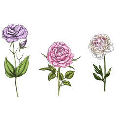 set with peony rose and eustoma flowers vector image vector image