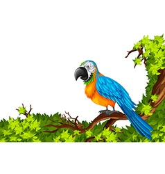 Parrot standing on branch vector