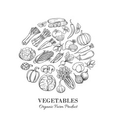 poster round composition with hand drawn vegetable vector image
