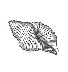 Seashell nautilus sea shell vector