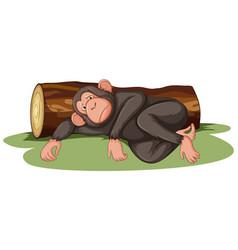 Sick monkey lying log vector