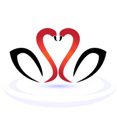 swans in love logo vector image