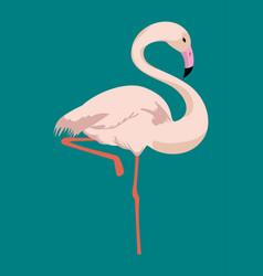 flamingo tropical bird icon vector image vector image