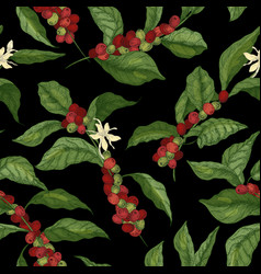 Botanical seamless pattern with coffea or coffee vector