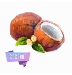 Coconut hand drawn watercolor on a white vector image