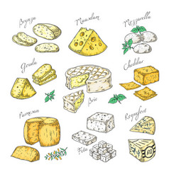 Hand drawn cheese doodle appetizers and food vector