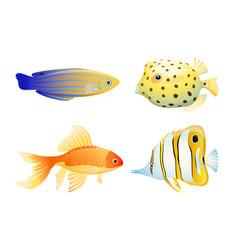 Maritime poster with diverse aquarium fish specie vector