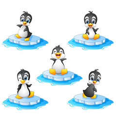 penguin cartoon set collection vector image