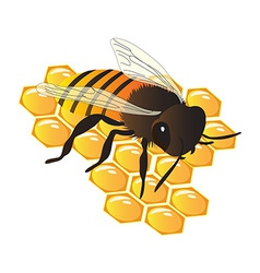 Bee on hive vector image vector image