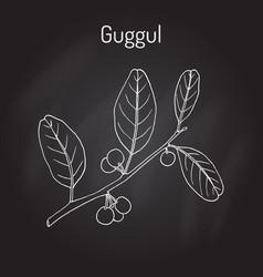 Best ayurvedic plant guggul commiphora wightii vector