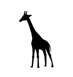 Giraffe african animal vector