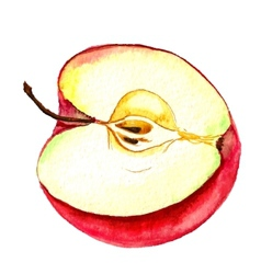half of apple vector image