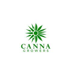 cannabies growers logo design vector image
