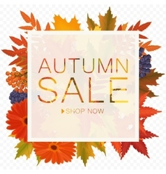 Autumn sale discount banner on the transperant vector image vector image