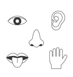 five senses icon vector image