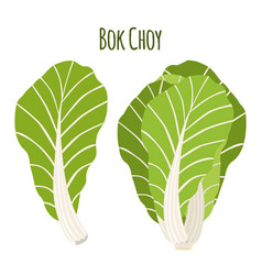 bok choy chinese cabbage in flat style natural vector image