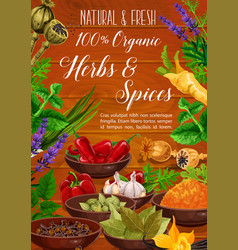 Spices culinary herbs and seasoning cooking food vector