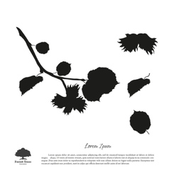 Black silhouette of branches of hazelnuts vector image vector image