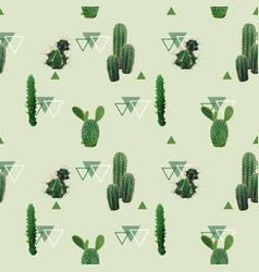 Cactus plant seamless pattern exotic tropical vector