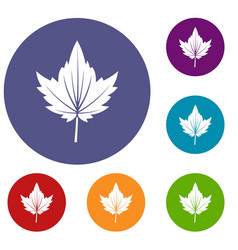 Currant tree leaf icons set vector