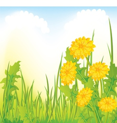 Dandelion meadow vector