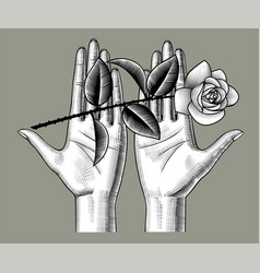 female hands holding a white roses on her palms vector image