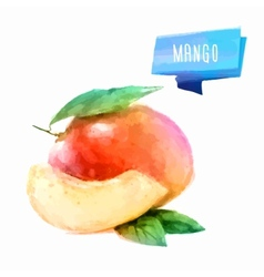 Mango hand drawn watercolor on a white background vector image