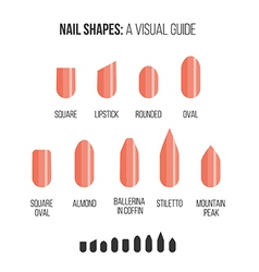 Nail shapes Visual guide vector image