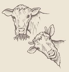 Portrait of bulls vector