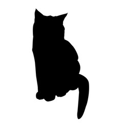 cat black silhouette on white vector image