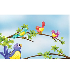 Colorful birds talking vector