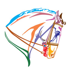 Colorful decorative portrait of andalusian horse vector