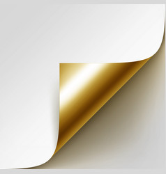 curled golden corner of paper with shadow vector image