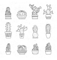 decorative potted cacti set hand-drawn vector image