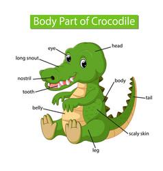 Diagram showing body part crocodile vector