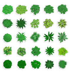 Trees top view green plants bushes shrubs and vector