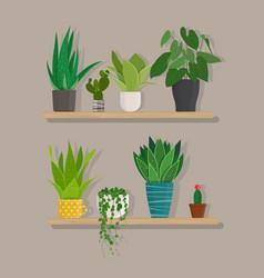 green indoor house plants in pots on the shelf vector image vector image