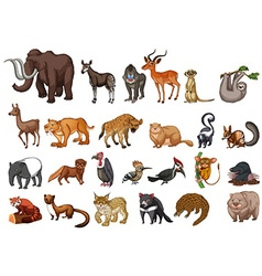 Different type of wild animals on white vector