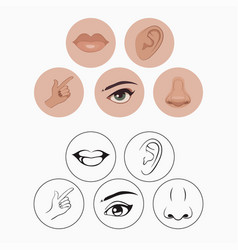 Five senses vector