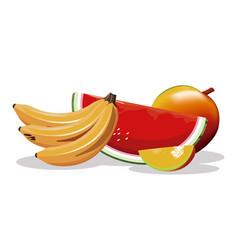 Mango banana watermelon fruit fresh harvest vector