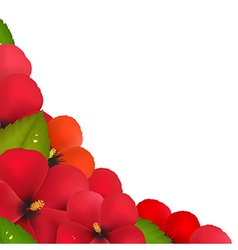 Red Hibiscus Flowers With Leaf Border vector