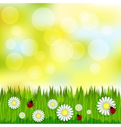Spring blurred pattern with grass and chamomile vector