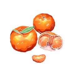 Color cartoon of mandarin and citrus vector