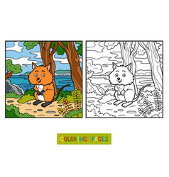 coloring book quokka vector image