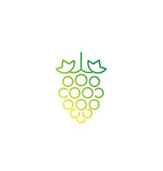 grape vineyard line icon on white vector image