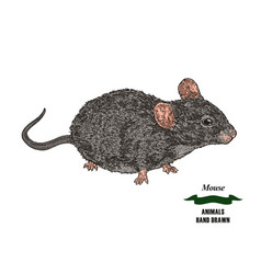 Hand drawn mouse or rat animal colored sketch on vector
