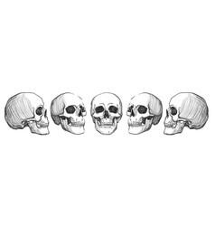 Skulls vintage vector