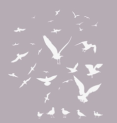 white pack of seagulls vector image vector image